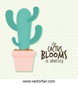cactus with the cactus blooms in adversity lettering in the side of it