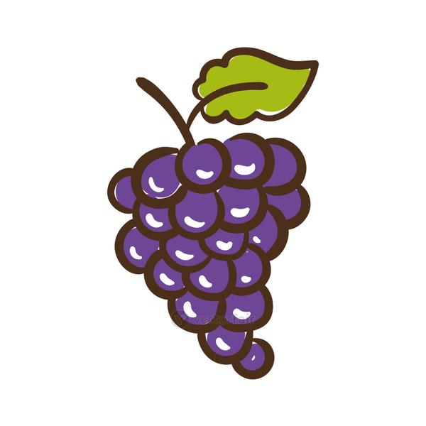 grapes fresh fruits hand draw style icon