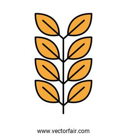 barley branch oktoberfest line and fill style icon