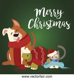 merry christmas cute dog turtle and cat with scarfs cartoon