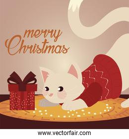 merry christmas cute cat with sweater and present box