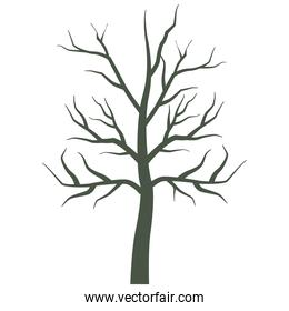 dry tree plant isolated icon