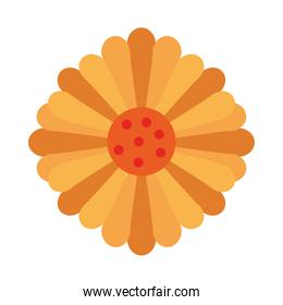 beautiful sunflower decoration garden icon