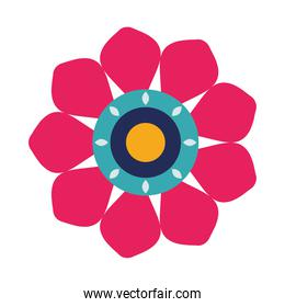 beautiful flower blue and pink decoration garden icon