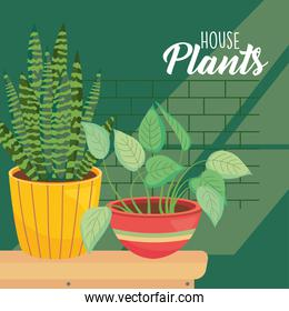house plants inside yellow and brown pots vector design
