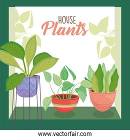 house three plants inside pots with green frame vector design
