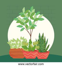 plants inside pots in front of green wall vector design