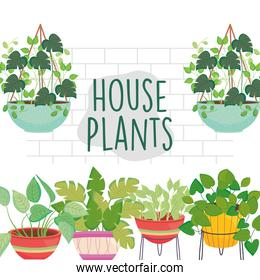 house plants inside pots in front of wall vector design