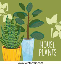 house two plants inside pots with leaves vector design