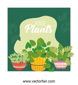 house plants inside brown yellow and purple pots vector design