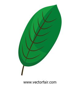 ovate form leaf plant style flat icon