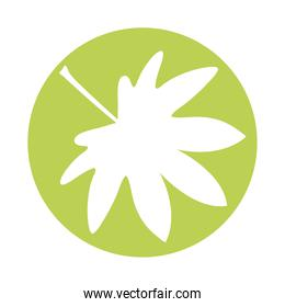 webbed form leaf plant style silhouette icon