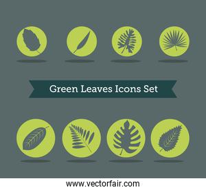 bundle of eight leafs plants and lettering in ribbon silhouette style icons