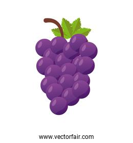 grapes fresh delicious fruit isolated style icon