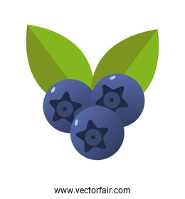 blueberries fresh delicious fruits isolated style icons