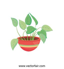 photos plant on a plantpot with colorful design, colorful design