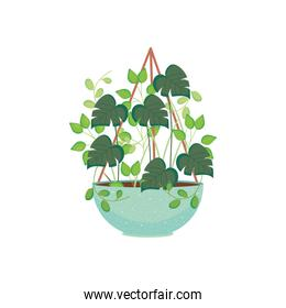 house hanging plant icon, colorful design