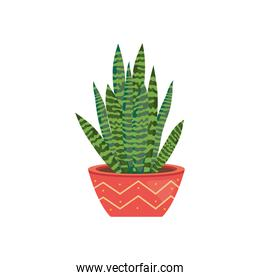 house plants concept, snake plant on a plantpot with abstract design, colorful design