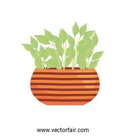 indoor plant on a striped plantpot, colorful design