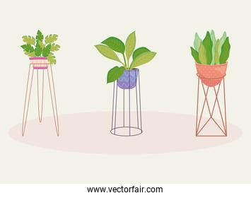 beautiful house plants on a plantpots and stands, colorful design