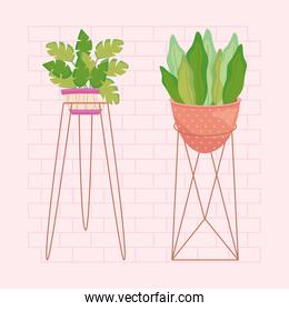 house plant on a modern plantpot and stand
