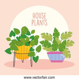 house plants design with beautiful plants on a colorful plantpots, colorful design