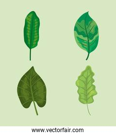 green leaves icon set, colorful design