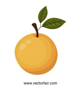 orange with a white background