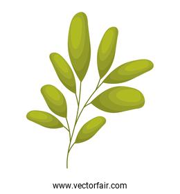 branch with leaves in a white background