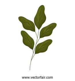 branch with leaves with a white background