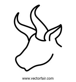 face of a bull over a white background
