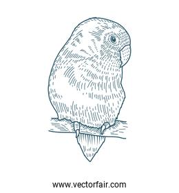 bird realistic character drawn style icon