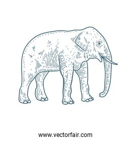 elephant realistic character drawn style icon