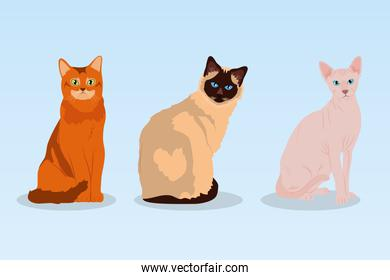 cartoon sphynx cat and cats, colorful design