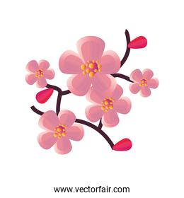 chinese pink flowers vector design