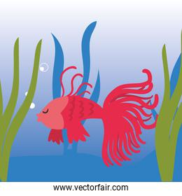 Fish animal at sea with algae vector design