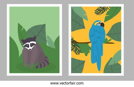 raccoon and macaw bird in landscape frames vector design