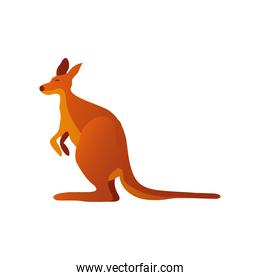 kangaroo marsupial animal australian wildlife icon