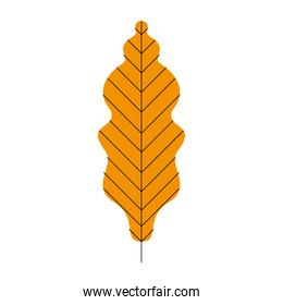 yellow color leaf plant
