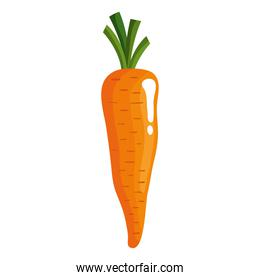 carrot vegetables healthy food isolated  icon