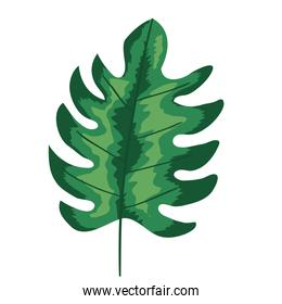 green tropical leaf plant ecology nature icon