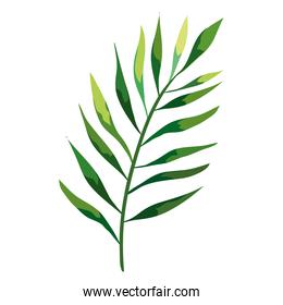tropical exotic branch with leafs nature icon