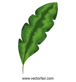 tropical leaf plant green ecology nature icon