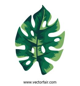 tropical leaf plant ecology nature icon