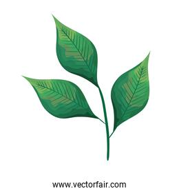 green branch with leafs plant ecology icon