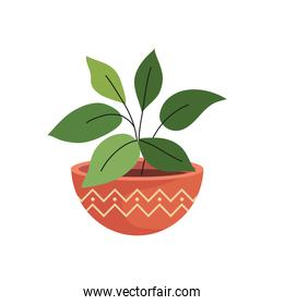 house plant in ceramic pot in orange color with waves line