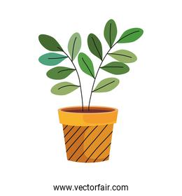 house plant in ceramic pot yellow color with lines