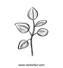 leafs plants nature ecology drawn isolated icon