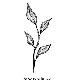 leafs plants nature ecology drawn isolated