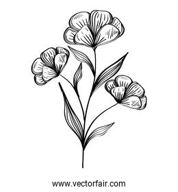 flowers and leafs plants nature ecology drawn isolated icon